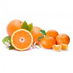 Orangen+Mandarinen