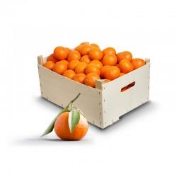 Ortanique Mandarinen 12 Kilo